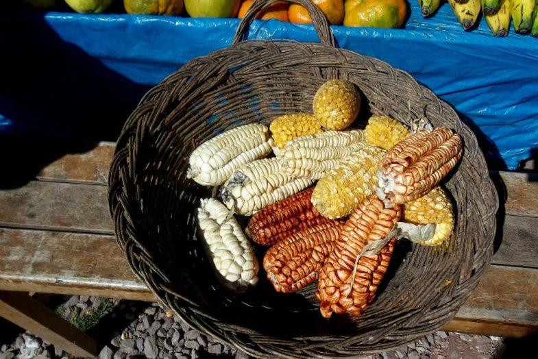 maiz peru