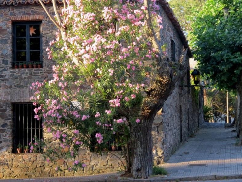 Que ver en Colonia Uruguay