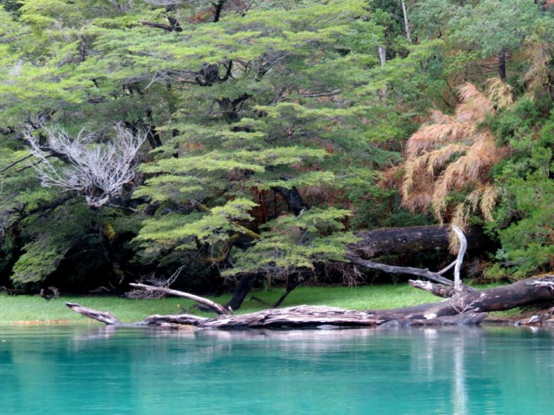 Imagenes Parque Nacional Los Alerces