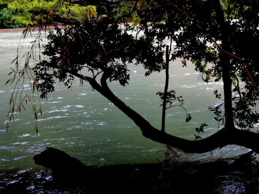 Rio Cisne PN Los Alerces